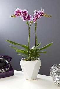 Cache Pot Orchidée : cache pot pour orchid e l 39 atelier des fleurs ~ Teatrodelosmanantiales.com Idées de Décoration