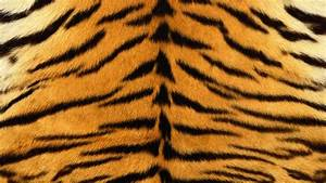 Download Tigers Fur Wallpaper 1920x1080 | Wallpoper #310860