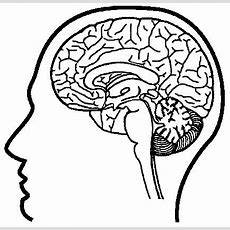 Neuroscience Resources For Kids  Coloring Book  Nervous System  Pinterest Coloring
