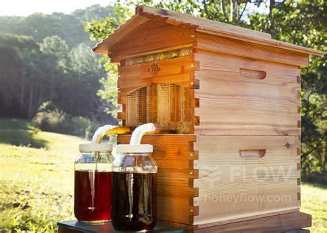 honey  tap  flow hive    harvest honey