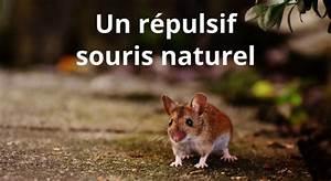 Répulsif Souris Efficace : r pulsif naturel pour souris et rat ~ Melissatoandfro.com Idées de Décoration