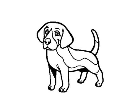 Beagle Kleurplaat by Beagle Coloring Page Coloringcrew