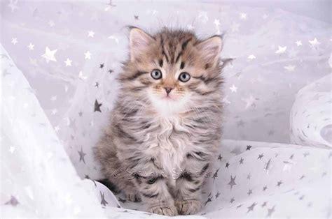wallpaper gambar kucing imut  lucu terbaru