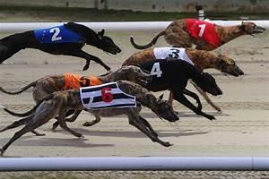 Greyhound Racing: Droopys Danneel is cracking bet | Horse ...