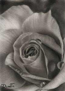 ACEO Flower No. 18 Rose No. 13 Original Black and White
