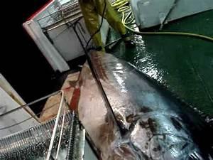Le Plus Gros Moteur Du Monde : le plus gros poisson du monde omg meilleure p che de ma vie youtube ~ Medecine-chirurgie-esthetiques.com Avis de Voitures