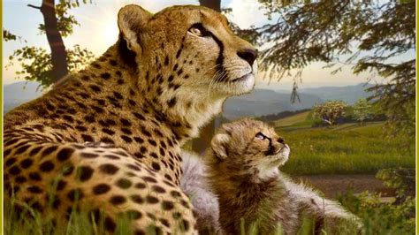 Big Cats Wallpapers High Resolution Wallpapersafari