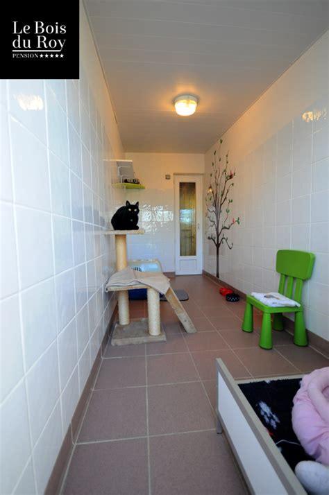 chambre avec 77 chambre avec cour pension pour chats le bois du roy