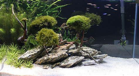 aquascaping materials 3 kg wood for an aquarium aquascaping