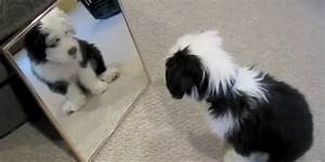 Puppy Looks Into Mirror, Is So Mesmerized By His ...