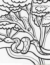 Coloring Rainforest Pages 2b2 Coloringpages101 Pdf sketch template