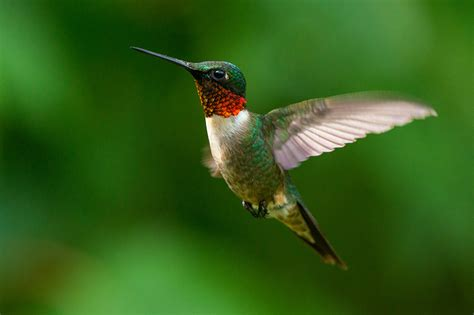 feeding birds nectar