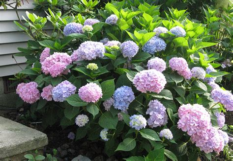Curb Appeal Plants Tips And Ideas That Make For The