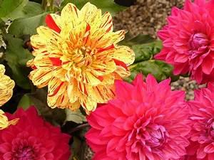 Winterharte Pflanzen Liste : sommerblumen die sommerblume ~ Michelbontemps.com Haus und Dekorationen