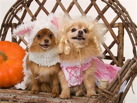 Diy Pet Halloween Costume Ideas
