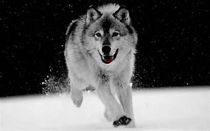 Wolves Quotes Quotesgram