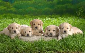 Cute Little Puppies wallpaper - 396883