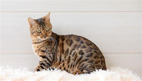 nettoyer pipi de chien sur canape enlever odeur urine de chat sur canape 28 images nettoyer urine de chat sur matelas my les