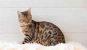 Odeur Urine Chat : urine de chat comment enlever l 39 odeur de pipi de chat ~ Maxctalentgroup.com Avis de Voitures