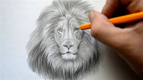 Time Lapse Drawing Of A Lion