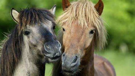 tiere wie die pferde zu ihrer farbe kamen welt