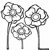 Poppy Coloring Pages Poppies Template Colouring Printable Remembrance Flower Anzac Drawing Thecolor Activities Templates Others Library Them Sheets Printables Getdrawings sketch template