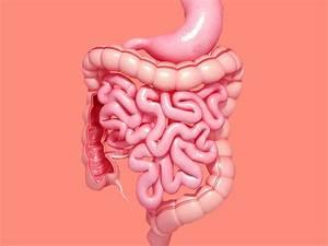 Ibs Vs  Ibd  Signs  Symptoms  And Causes Of Each