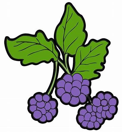 Berry Berries Clipart Blackberry Clip Blueberry Wild