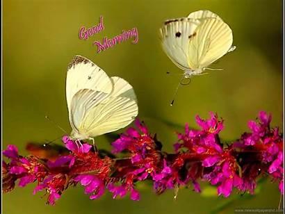 Wallpapers Morning Stylish Flowers Butterflies Flower Butterfly