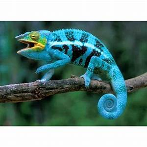 Exotic Reptile Shop Exotic Reptiles Products and Images