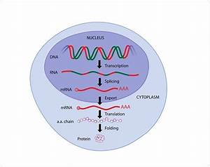 A Guide To Understanding Gene Expression