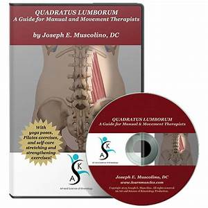 Quadratus Lumborum  A Guide For Manual And Movement