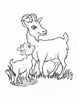 Goat Coloring Printable Goats Animals Template Recommended sketch template