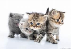 S, U00fc, U00dfe, Katzenbilder, Und, Katzenfotos
