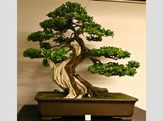 17 Best images about Succulents, Bonsai & Penjing on