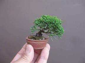 mame bonsai bonsai empire