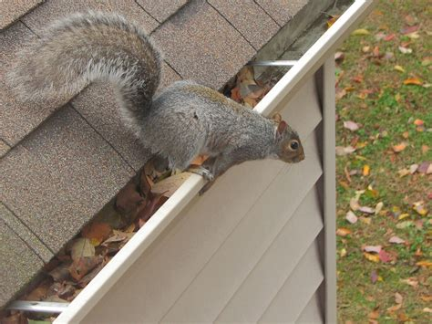 How Keep Squirrels Away From Your Home Garden