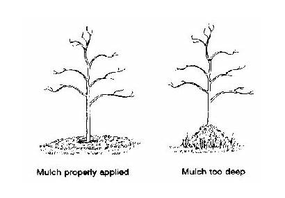 Mulching Season March