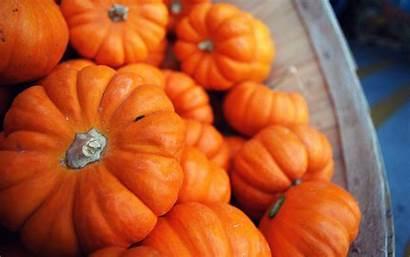 Pumpkin Pumpkins Fall Wallpapers Halloween Desktop Autumn