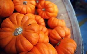 Fall Pumpkin Wallpapers - Wallpaper Cave