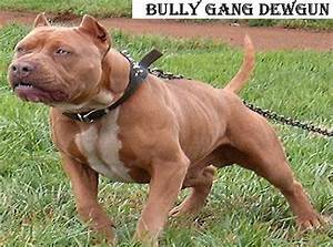 red nose bully pit bulls Quotes