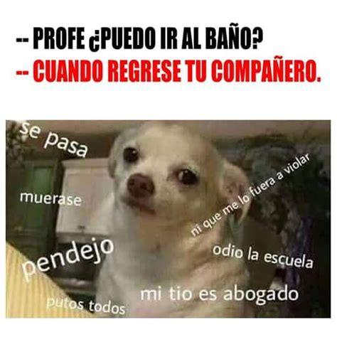 Memes De Chihuahua - memes perros chihuahua memes perros pinterest chihuahuas and meme