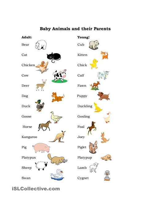Baby Animals (With images) Baby animal names Animal