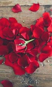 Pin by Erwin Lacroix on L.O.V.E | Valentines roses, Rose ...