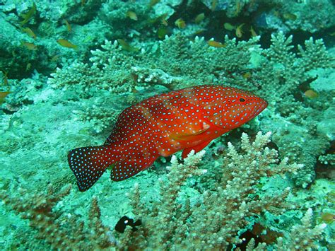 saltwater reef groupers communicate coral language use body sign