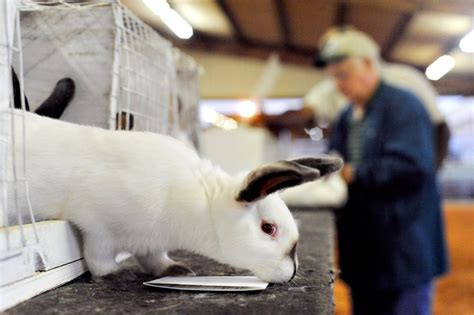 junior fair rabbit judging dodge county fairgrounds