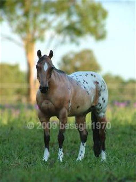 belinda kranz custom  peter stone breyer horse collector