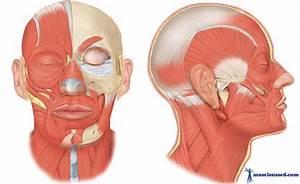 B3 Jorge Fuenmayor Head Muscles