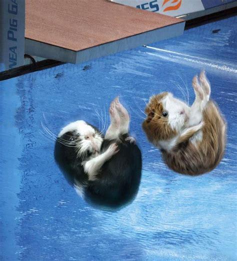 super funny guinea pig games calendar design swan
