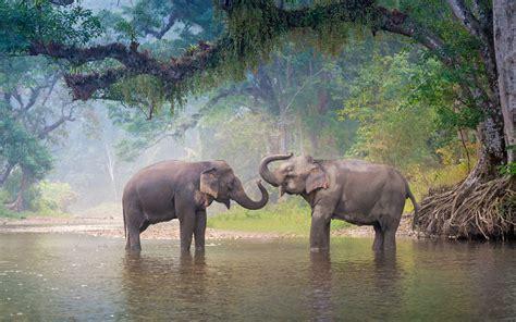 Download wallpapers 4k elephants river wildlife